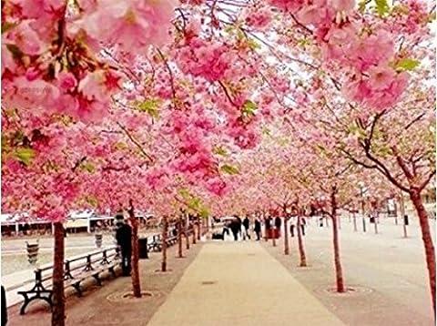 PaintingStudio Route romantique avec des arbres de cerisier fleur rose bricolage peinture a l'huile par kits numero Peintures Toile mur 16x20 pouces sans cadre