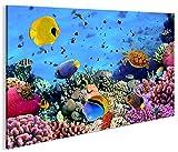 islandburner Bild Bilder auf Leinwand Aquarium Fische Meerwasser Tropische Doktorfische 1K XXL Poster Leinwandbild Wandbild Art up Your Life