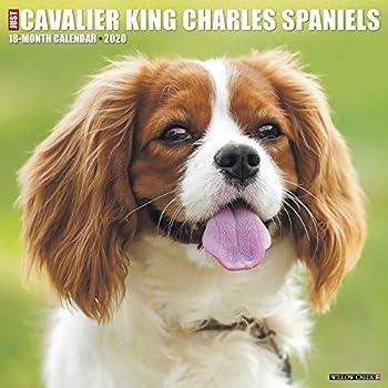Just Cavalier King Charles Spaniels 2020 Calendar