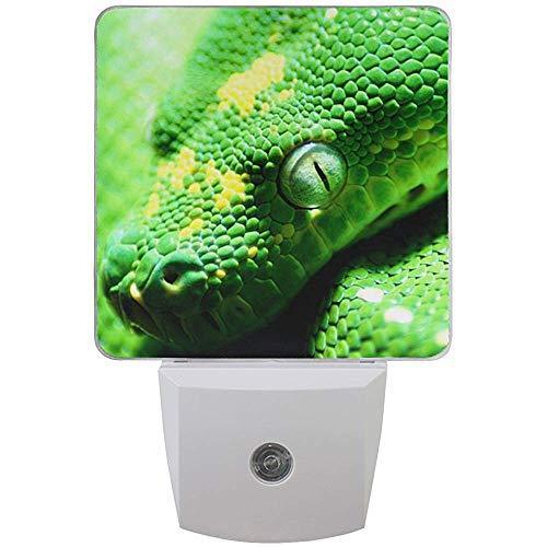 Conjunto de 2 serpiente verde reptil de la selva tropical animal selva tropical luz nocturna sensor automático luz nocturna