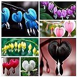 AGROBITS 5: 200P Herz-Blumensamen Dntra Spectabilis Sweet Hearts Wallet