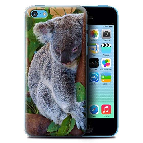 Coque de Stuff4 / Coque pour Apple iPhone 5C / Panda Design / Animaux Sauvages Collection Koala