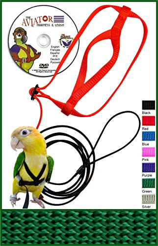Verte oiseaux achat   vente de Verte pas cher c736d079e6e6