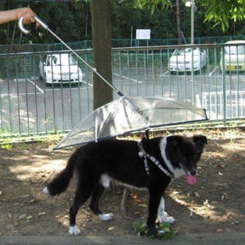 Happylife Pet paraguas (paraguas de perro) mantiene tu mascota seco y cómodos en lluvia