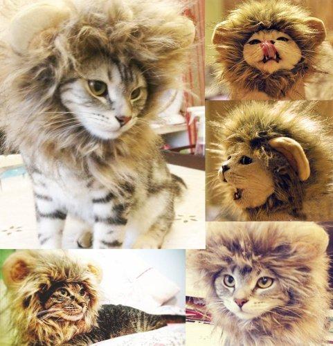 (Lanlan Löwenkostüm für Katze Fancy Kleid Up? Blender M?)