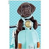 "Póster Studio Pets/Máscotas de estudio ""Scooter/Motocicleta"" (61cm x 91,5cm)"