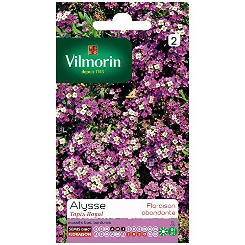 Vilmorin - Sachet graines Alysse Tapis Royal