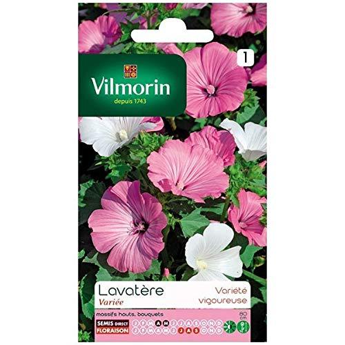 Vilmorin - Sachet graines Lavatère à grande fleur variée