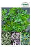 EVRGREEN | Bioland | Kräuter-Set | Pflanzen im Set mit Rosmarin, Currykraut, Zitronenminze und Thymian für Garten oder Balkon