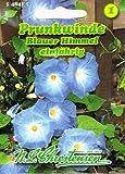 Prunkwinde Blauer Himmel Pharbitis purpurea Winde rankend Saatgut
