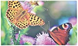 Fallen Fruits Garten Fußmatte in einem Schmetterling Design bedruckt