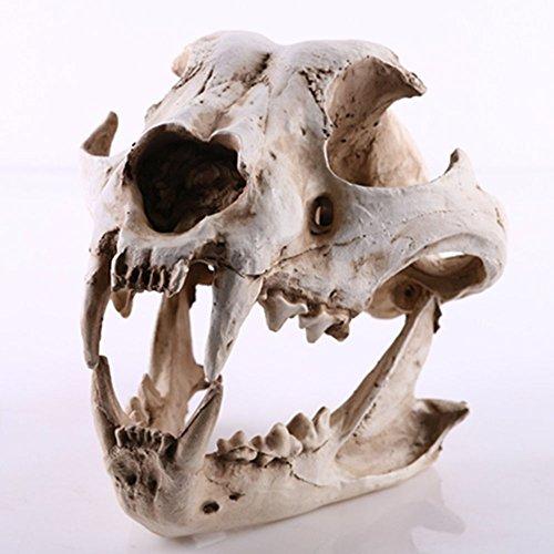 YX Oggetto decorativo a forma di teschio di lupo/iena, Resina, Dingo skull