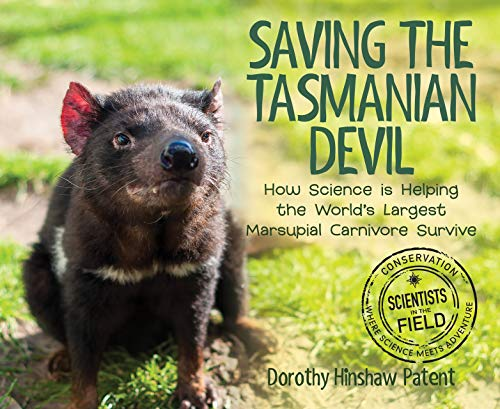 Saving the Tasmanian Devil: How Science Is Helping the World's Largest Marsupial Carnivore Survive (Scientists in the Field Series) (English Edition)
