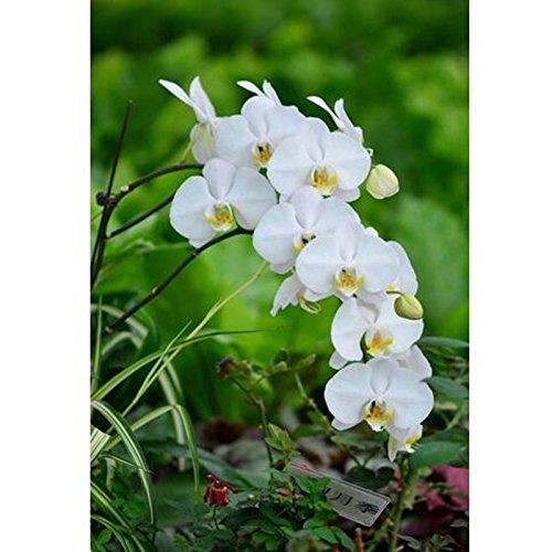 Vente rares orchidées