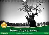 Baum Impressionen (Wandkalender 2020 DIN A4 quer): Unterwegs in deutschen Wäldern (Monatskalender, 14 Seiten ) (CALVENDO Natur) -