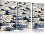 Conchiglie in 3 pezzi immagine sabbia immagine tela 120x80 su tela, XXL enormi immagini completamente Pagina con la barella, stampe d'arte sul murale cornice gänstiger come la pittura o un dipinto ad olio, non un manifesto o un banner,