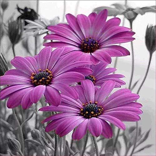 Sunnay Diamond Painting Set,Vase Mit Rosen, 5D Diamant Painting Set Full Stickerei Groß Bilder DIY Diamonds Malerei, 30x40cm (Purple Flowers, 30 x 30 cm)