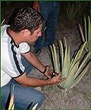 Aloe Vera Premium Bio Direktsaft – Handfiletiert - 5