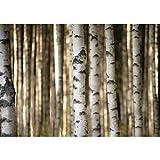 Vlies Fototapete PREMIUM PLUS Wand Foto Tapete Wand Bild Vliestapete - Bäume Birken Wald - no. 2553, Größe:254x184cm Vlies