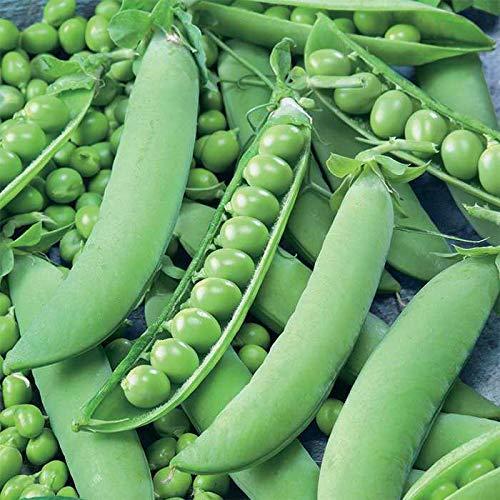 Shoopy Star Liveseeds - Jardin Graines de pois - Kelvedon Wonder 100 graines