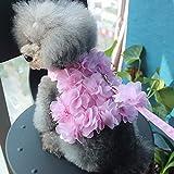 Lushpetz Hundegeschirr mit passender Leine Rosa Blau Grün Blüte für winzige, kleine und mittelgroße Hunderassen