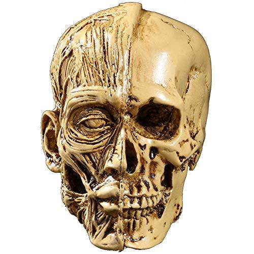 Kunst-Skizze-Harz-Schädel, hochpräzises Schädel-Harz-Modell, menschliches muskuloskelettales, Inneneinrichtung, Halloween-Geschenk, kreative Dekoration,Yellow