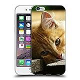 Just Phone Cases Schutz Hülle TPU Case Schutzhülle Silikon Tasche Dünn Transparent // V00004287 Katze liegend auf Holzbrettern // Apple iPhone 6 4.7