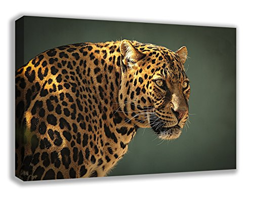 Leopard Wild Animal HD High Qualität Leinwand Art Wand (76,2 x 45,7 cm) -