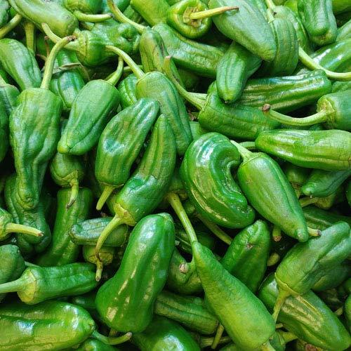 Pimientos de Padron/Pimento Padron 25/50/100 x Samen in Bioqualität - mild zum fühlen, grillen, braten, als Vorspeise (25 Samen)