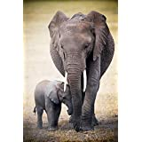 empireposter 728616 Africa – Elephant and baby – Póster – Maxipóster tamaño 61 x 91,5 cm, papel, multicolor, 91,5 x 61 x 0.14 cm