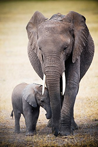 empireposter 728616Africa–Elephant and Baby–Póster–Maxipóster tamaño 61x 91,5cm, Papel, Multicolor, 91,5x 61x 0.14cm