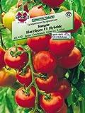 Tomate Harzfeuer F1 Hybride
