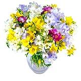 Clare Florist Freesia Fragrance Fresh Flower Bouquet - Colourful Mixed Freesia