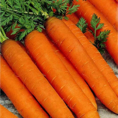 premier-seeds-direct-car22-carrot-resistafly-f1-finest-seeds-pack-of-1000