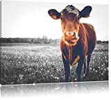 Einzelne Kuh auf Butterblumenwiese in der Abendsonne B&W Detail, Format: 60x40 auf Leinwand, XXL riesige Bilder fertig gerahmt mit Keilrahmen, Kunstdruck auf Wandbild mit Rahmen, günstiger als Gemälde oder Ölbild, kein Poster oder Plakat