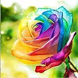 yeesam Art neuen 5D Diamant Painting Kit–Colorful Rose–DIY Kristall Diamant Strass Gemälde eingefügt Malen nach Zahlen Kits Kreuzstich Stickerei