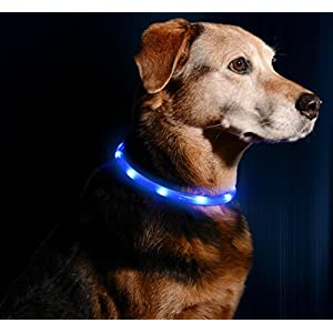 Illumiseen LED Dog Necklace Collar - USB Rechargeable Loop - Available in 6 Colours - Makes Your Dog Visible, Safe & Seen 12