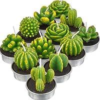 12 Piezas de Vela de Cactus Planta Carnosa Velas Delicadas Hechas a Mano para Decoración de Hogar Fiesta de Boda Spa Regalos