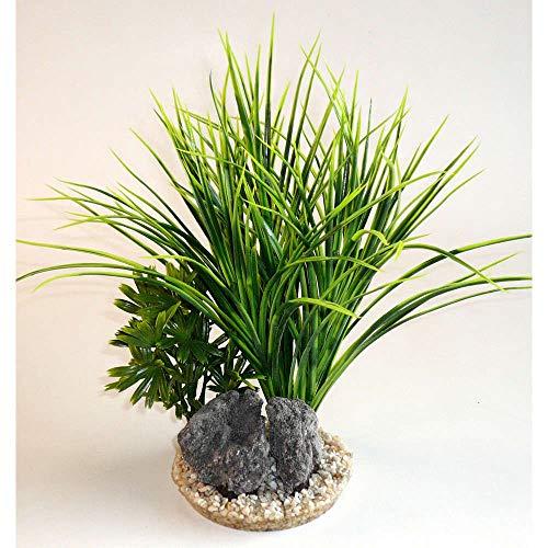 Sydeco Aquariumpflanze: Dekoration D & # 39; Aquarium: Kalmus (Gattung) Rock