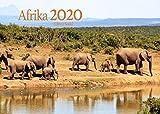 Edition Seidel Afrika Premium Kalender 2020 DIN A3 Wandkalender Tiere Tierwelt Elefant Löwe
