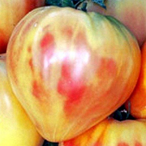 orange-gelb-gestreifte-fleischtomate-orange-russian-20-samen