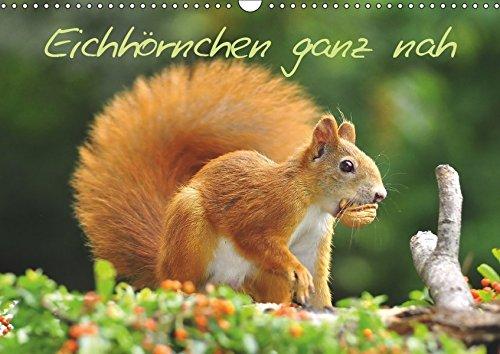 Eichhörnchen ganz nah (Wandkalender 2019 DIN A3 quer): Kleine Nager auf Futtersuche (Monatskalender, 14 Seiten ) (CALVENDO Tiere)