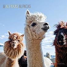 Alpakas 2021 - Broschürenkalender 30x30 cm (30x60 geöffnet) - Alpacas - Bild-Kalender - Wandplaner - mit Platz für Notizen - Alpha Edition