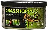 Exoterra Aliment Sauterelles Sauvages Small pour Reptiles et Amphibiens 34 g