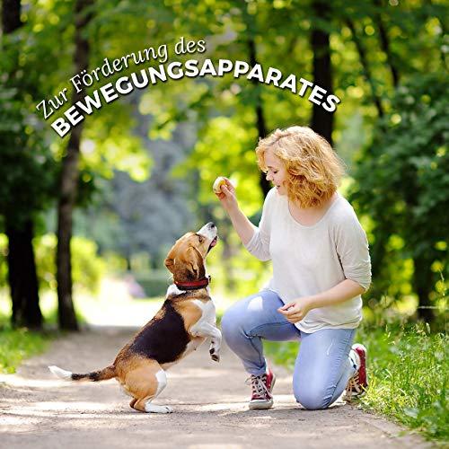 AniForte® Pfotenschutz Balsam 120 ml – Besonderer Schutz & Pflege für Pfoten – Pflegemittel für Hunde und Katzen - 5