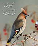 Vögel unserer Heimat 2018: Wandkalender groß. Fotokunst-Kalender mit Bildern von Vögeln in der heimischen Natur. 45,5 x 55 cm
