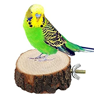 Moxcow Parrot Bird Cage Perches Round Wooden Coin Stand Platform Moxcow Parrot Bird Cage Perches Round Wooden Coin Stand Platform 51ImBJglv4L