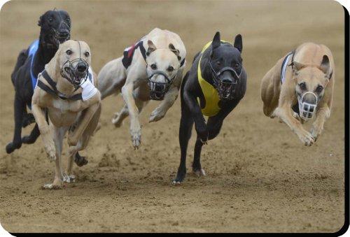 greyhound-perro-alfombrilla-de-ratn-pad-regalo-nico-para-todos-los-amantes-del-perro-141