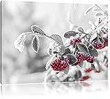 Vogelbeeren im frostigen Winter schwarz/weiß Format: 80x60 auf Leinwand, XXL riesige Bilder fertig gerahmt mit Keilrahmen, Kunstdruck auf Wandbild mit Rahmen, günstiger als Gemälde oder Ölbild, kein Poster oder Plakat