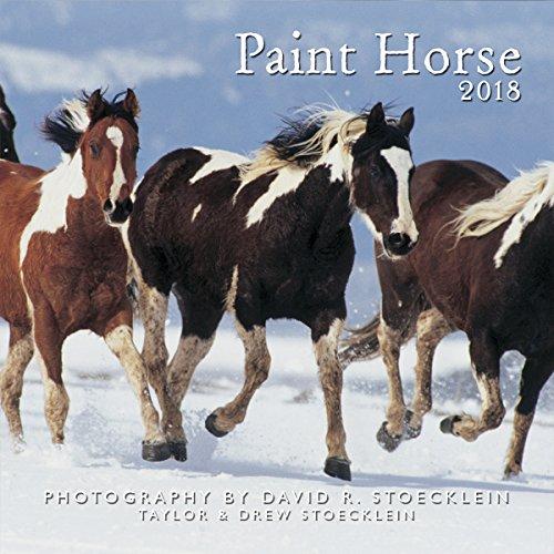 2018 PAINT HORSE CAL por David R. Stoecklein